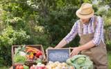 mercato biologico organic
