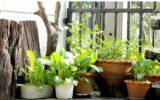 Insetti: come difendere ortaggi e piante
